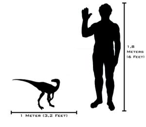 Human-eoraptor_size_comparison(v2)